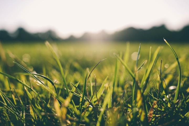 grass-916407_1920