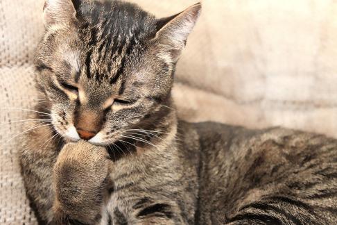 cat-1094713_1920