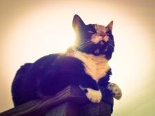 cat-936612_1920