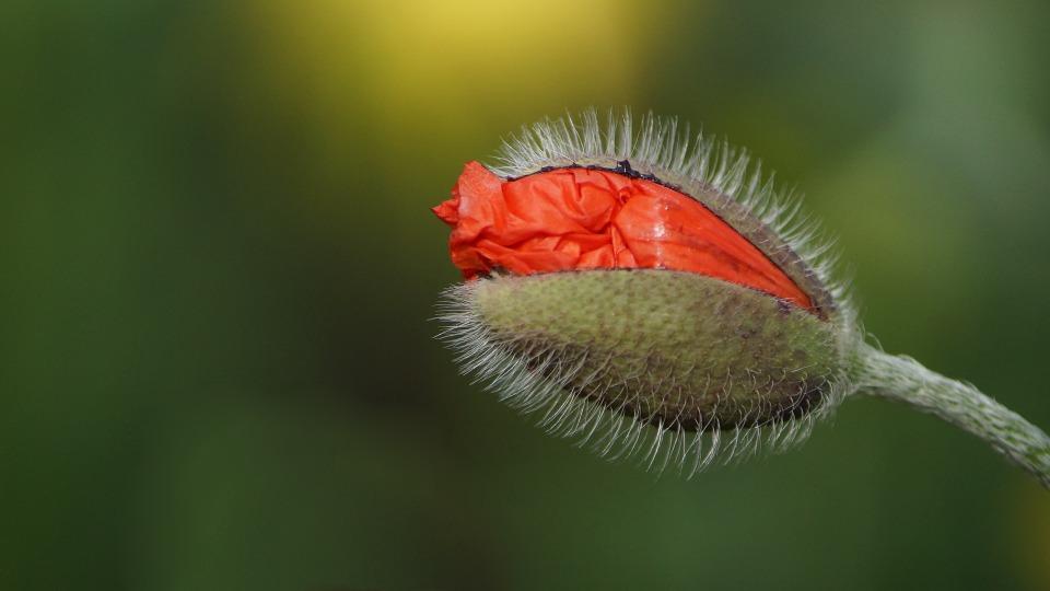flower-870157_1920